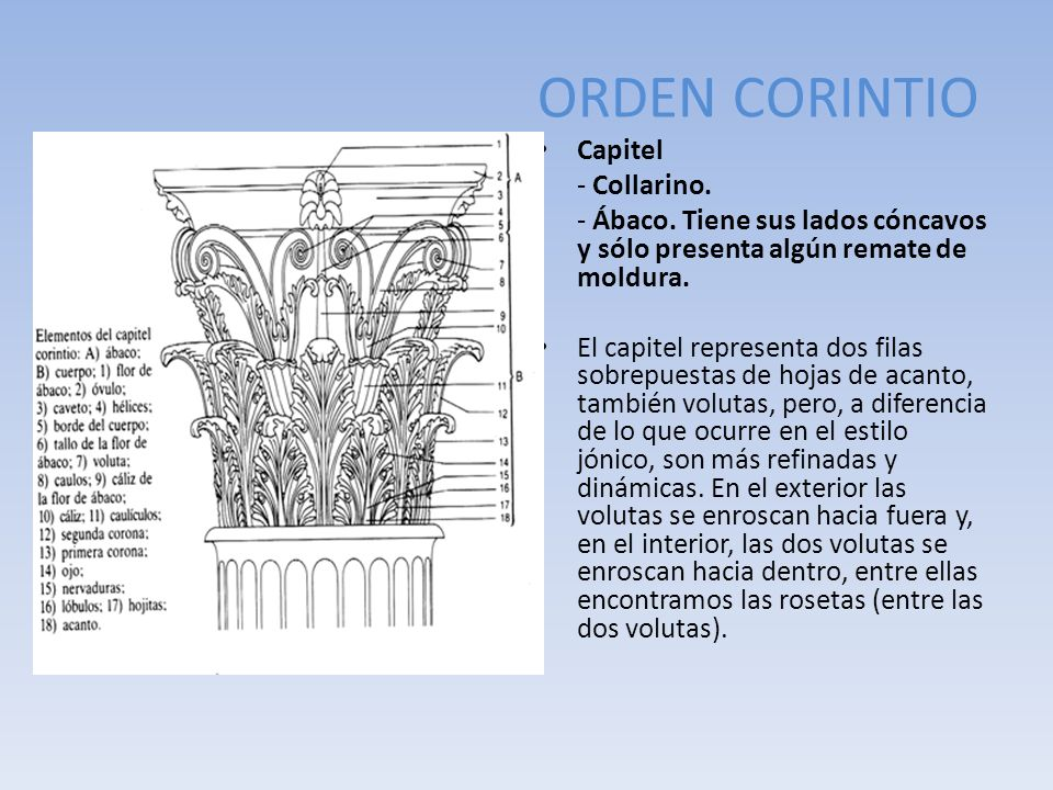 ORDEN CORINTIO Capitel - Collarino.
