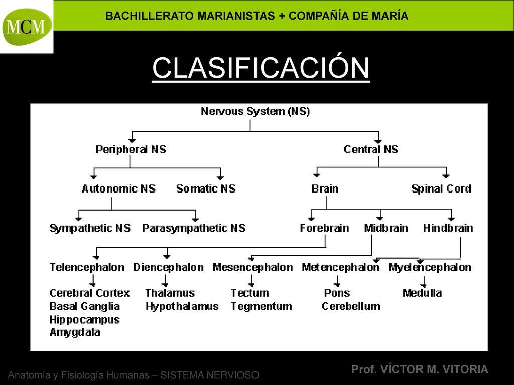 Dorable Anatomía Y Fisiología Recursos Para Profesores Fotos ...