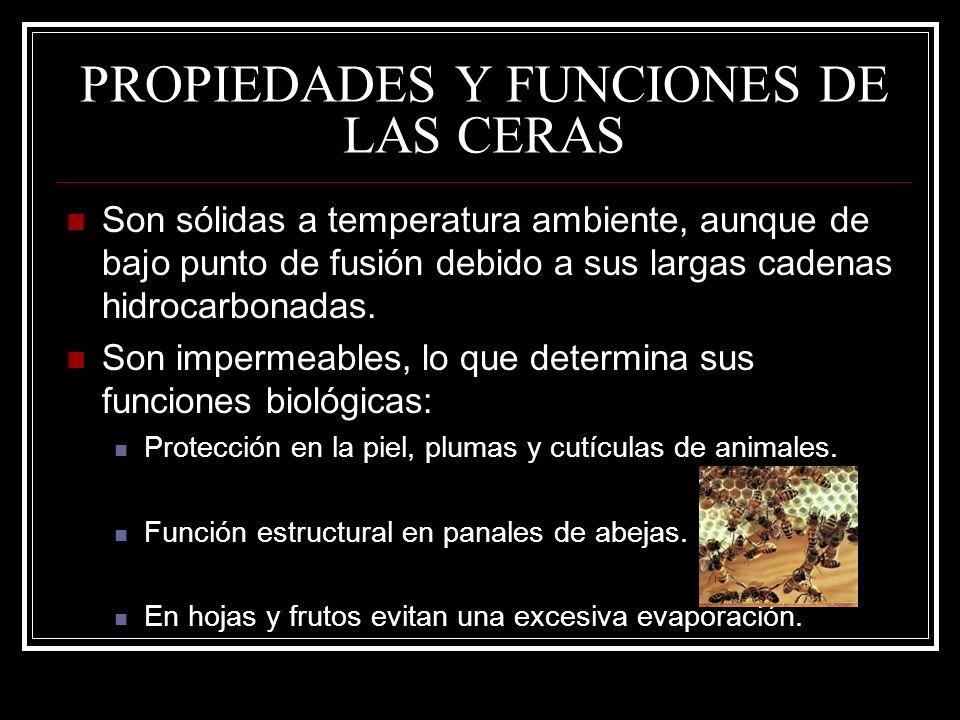 PROPIEDADES Y FUNCIONES DE LAS CERAS