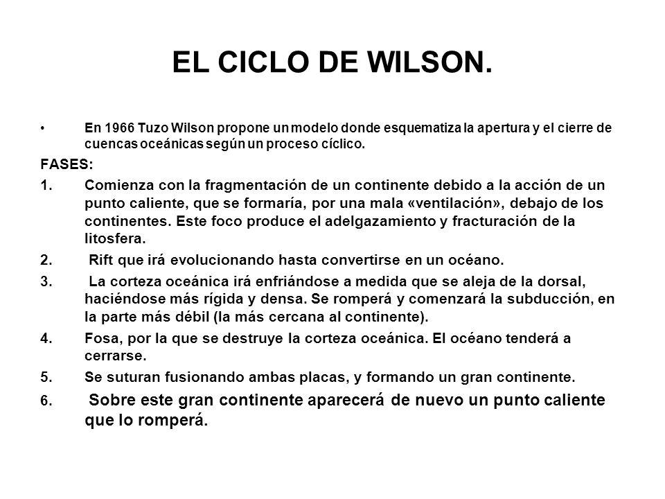 EL CICLO DE WILSON. FASES: