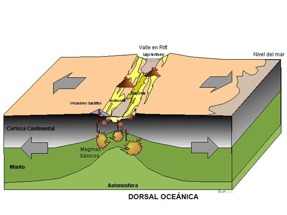 DORSAL OCEÁNICA