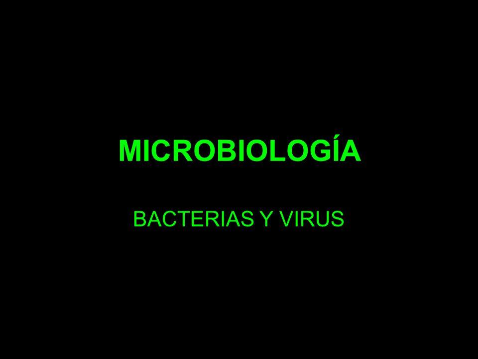 MICROBIOLOGÍA BACTERIAS Y VIRUS