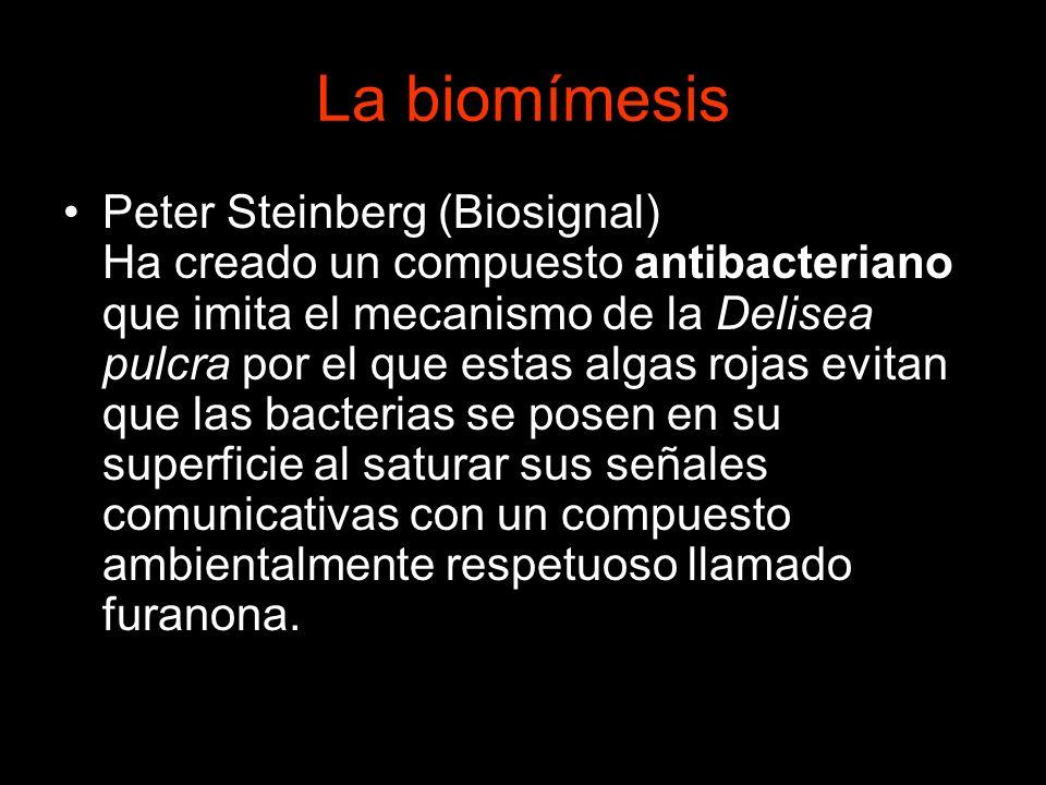 La biomímesis