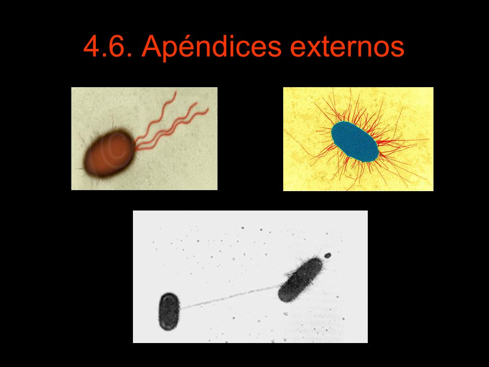 4.6. Apéndices externos