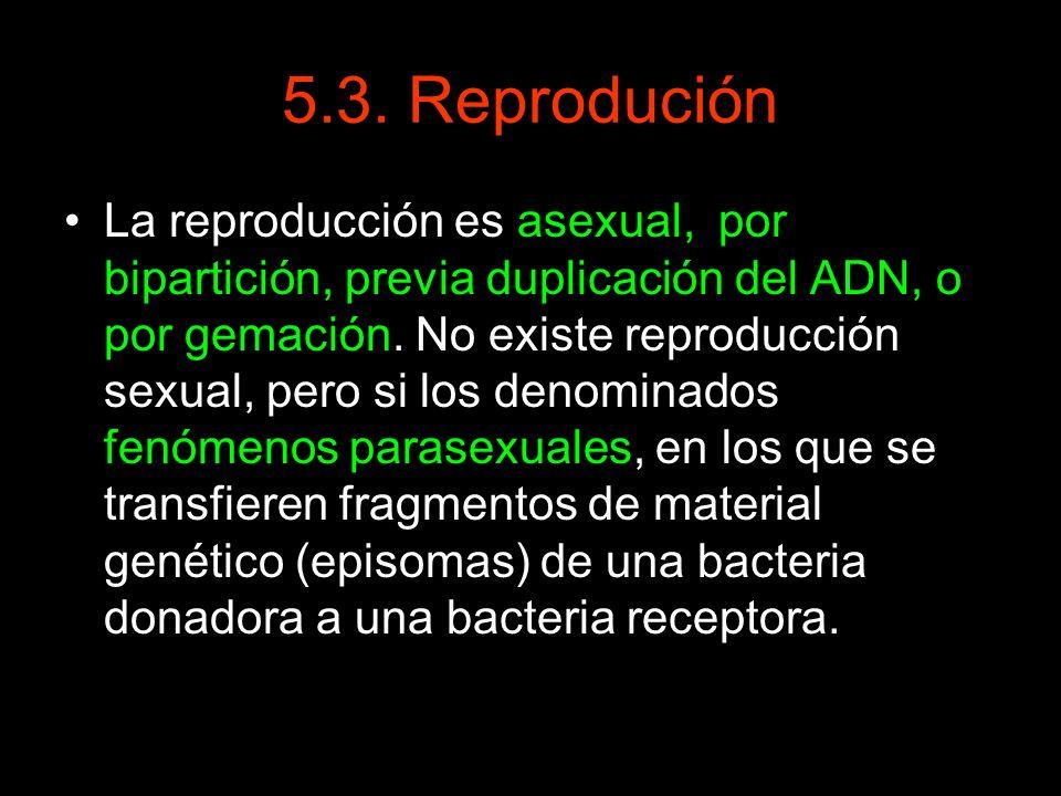 5.3. Reprodución