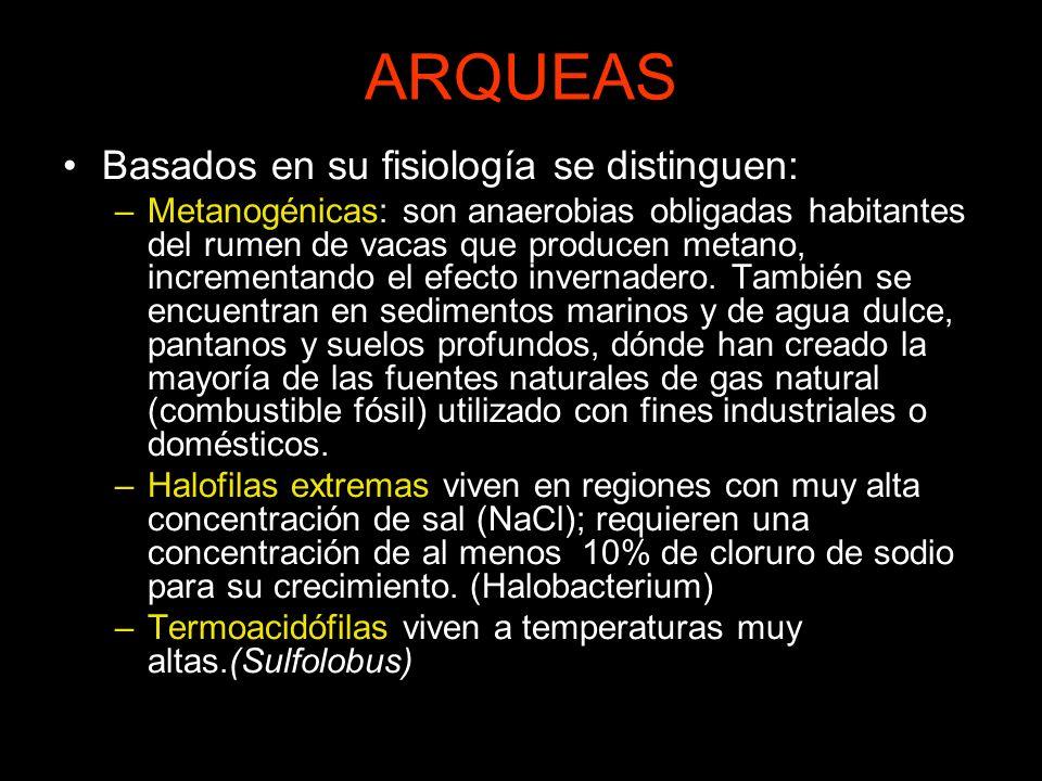 ARQUEAS Basados en su fisiología se distinguen: