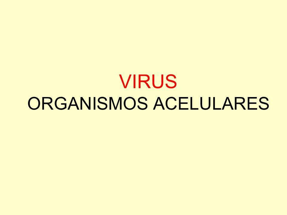 VIRUS ORGANISMOS ACELULARES
