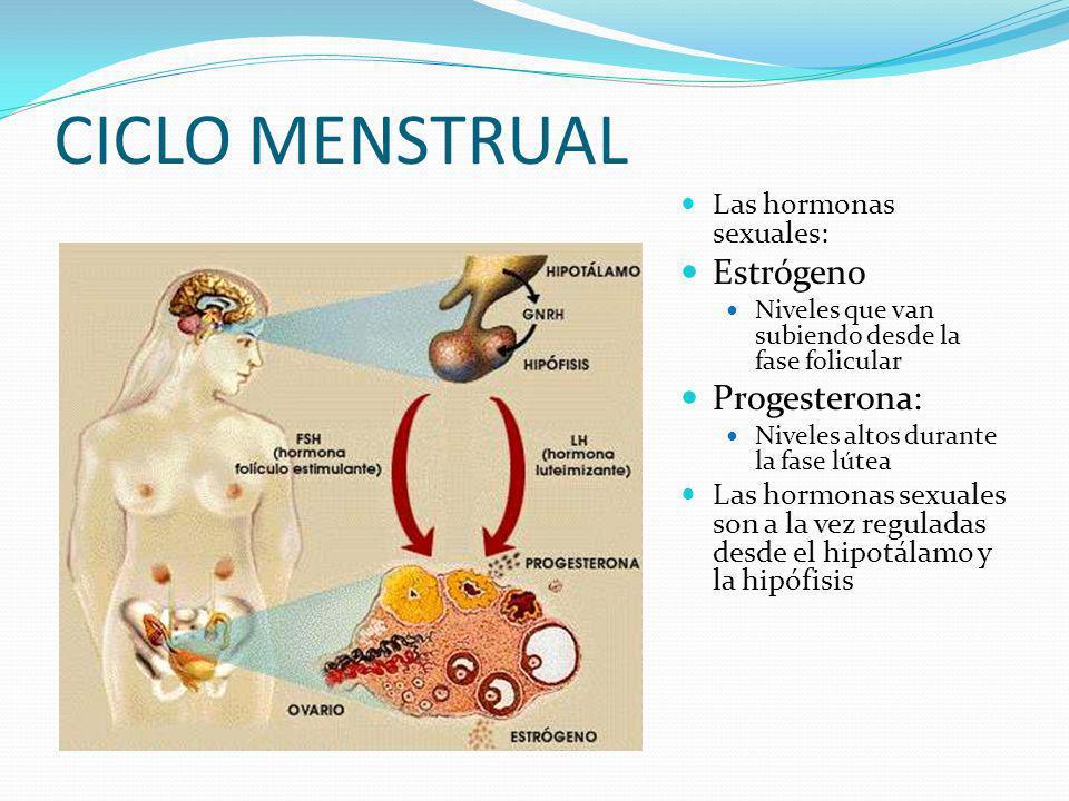 CICLO MENSTRUAL Estrógeno Progesterona: Las hormonas sexuales:
