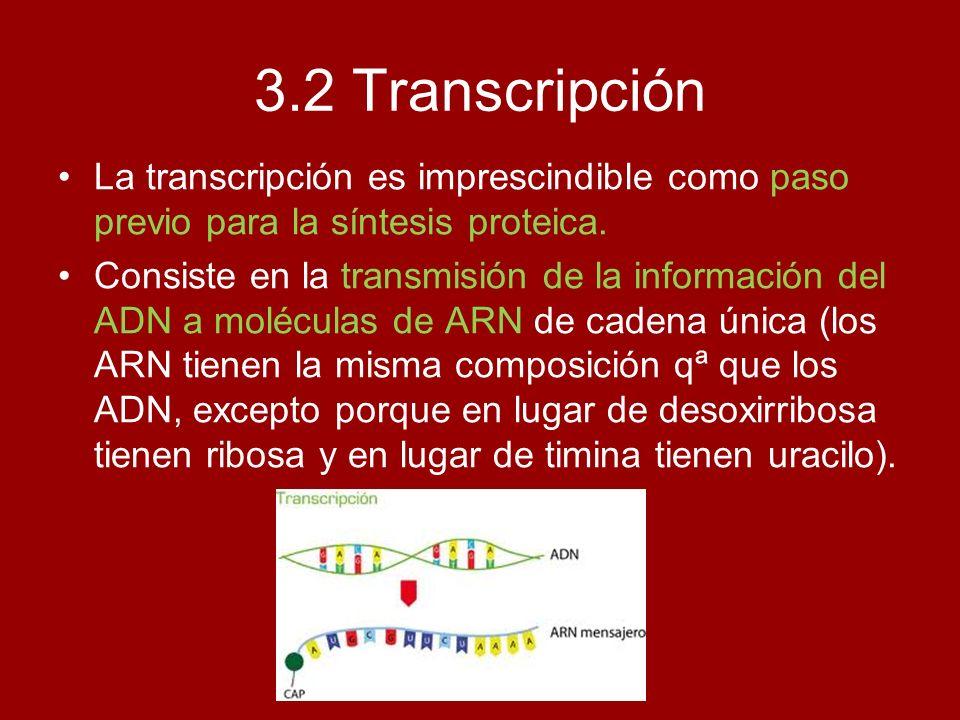 3.2 TranscripciónLa transcripción es imprescindible como paso previo para la síntesis proteica.