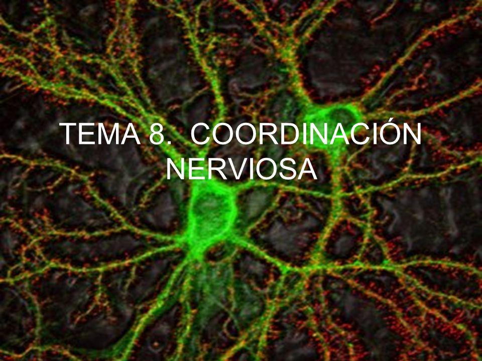 TEMA 8. COORDINACIÓN NERVIOSA
