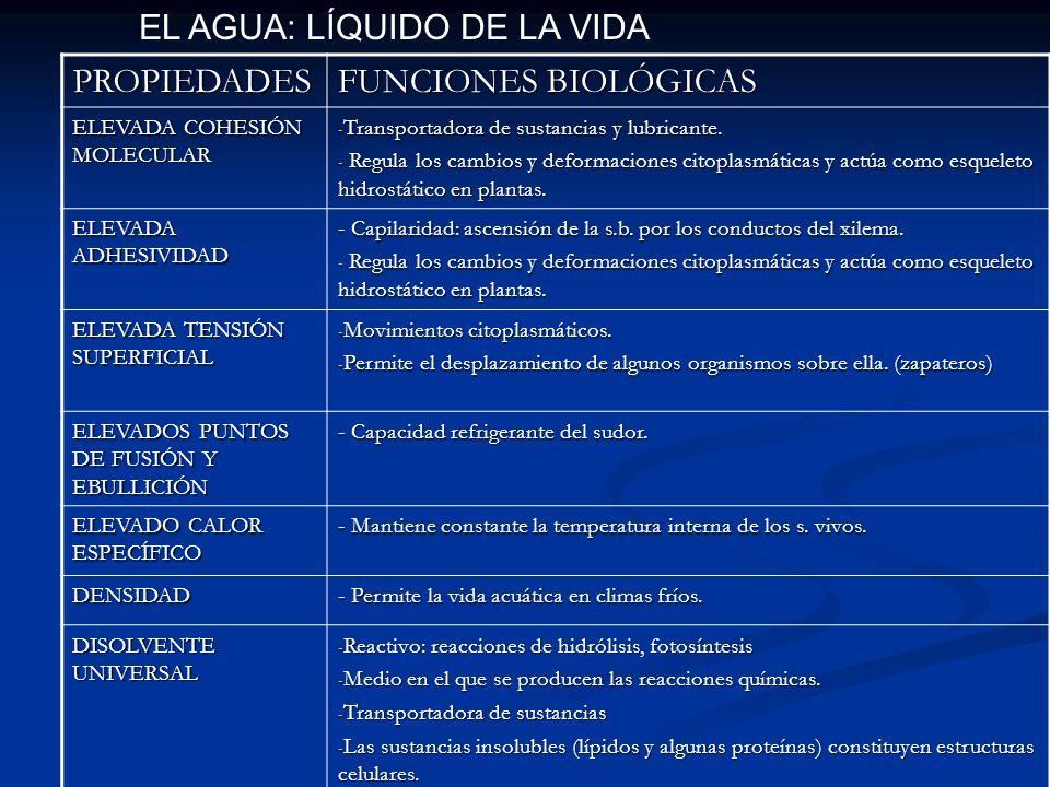 EL AGUA: LÍQUIDO DE LA VIDA PROPIEDADES FUNCIONES BIOLÓGICAS