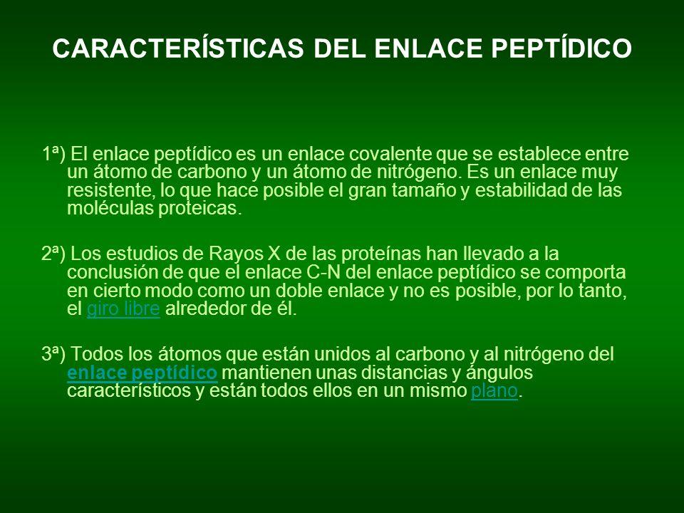 CARACTERÍSTICAS DEL ENLACE PEPTÍDICO