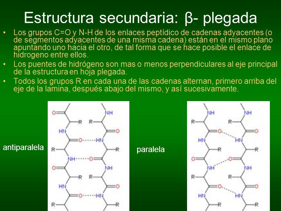 Estructura secundaria: β- plegada