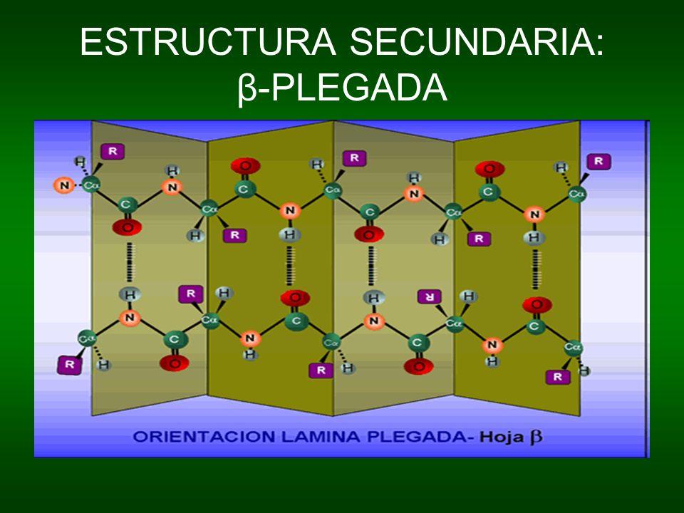 ESTRUCTURA SECUNDARIA: β-PLEGADA