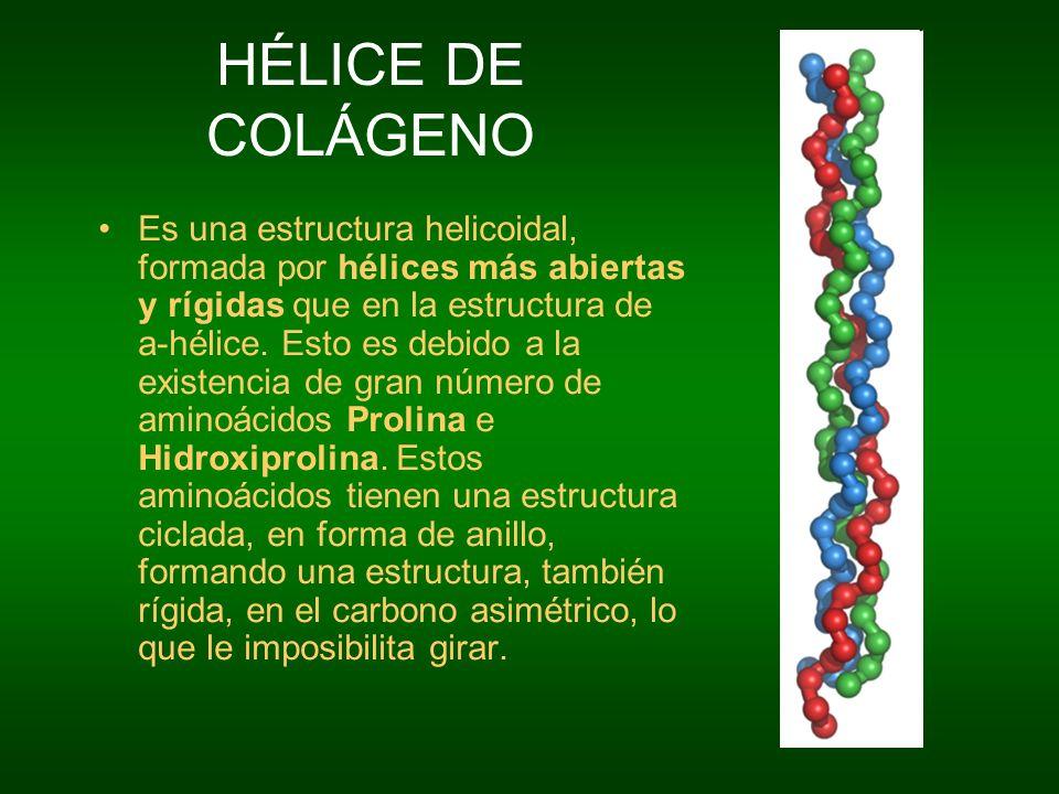 HÉLICE DE COLÁGENO