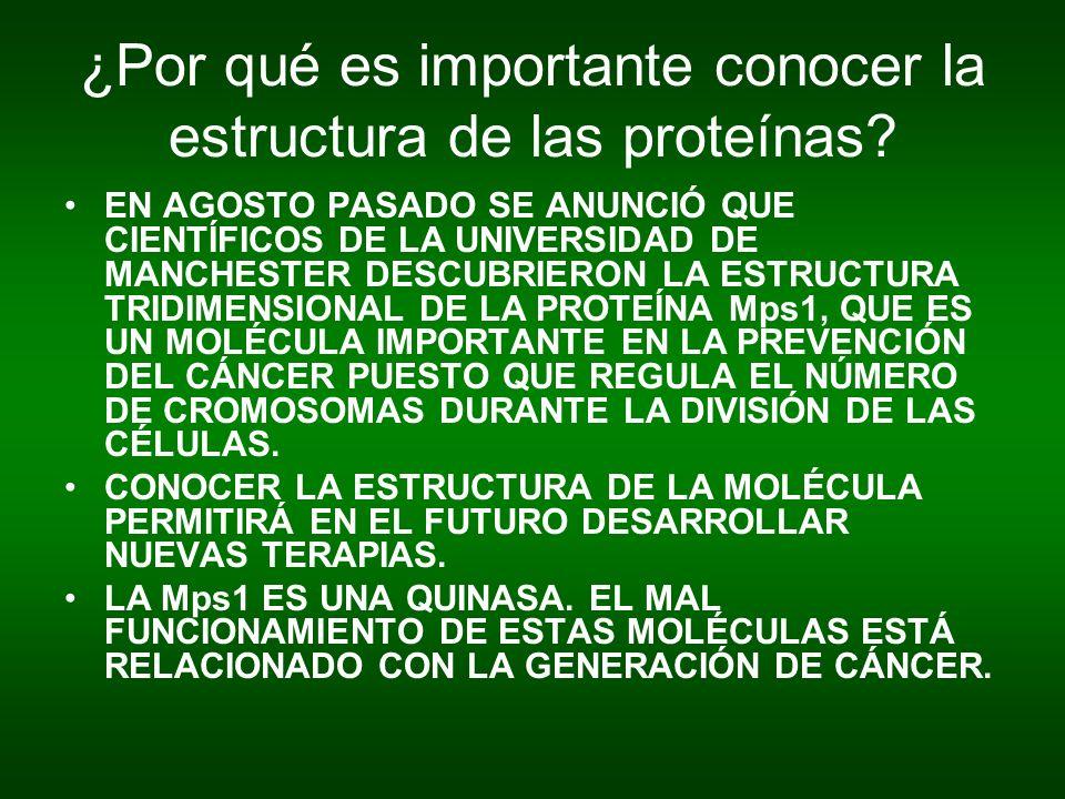 ¿Por qué es importante conocer la estructura de las proteínas