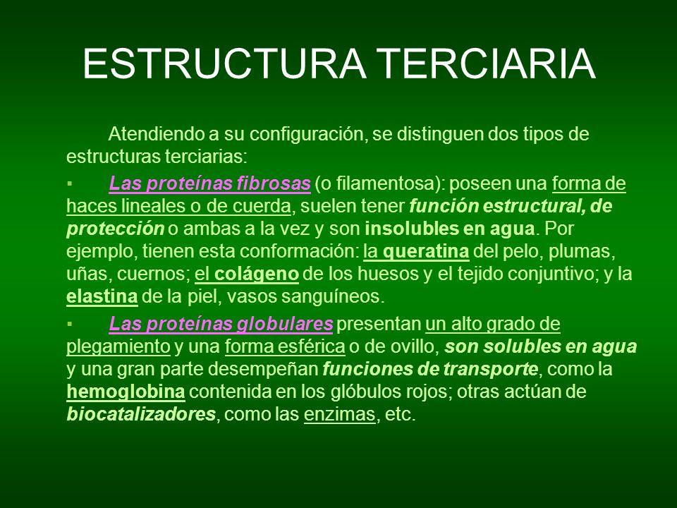 ESTRUCTURA TERCIARIA Atendiendo a su configuración, se distinguen dos tipos de estructuras terciarias: