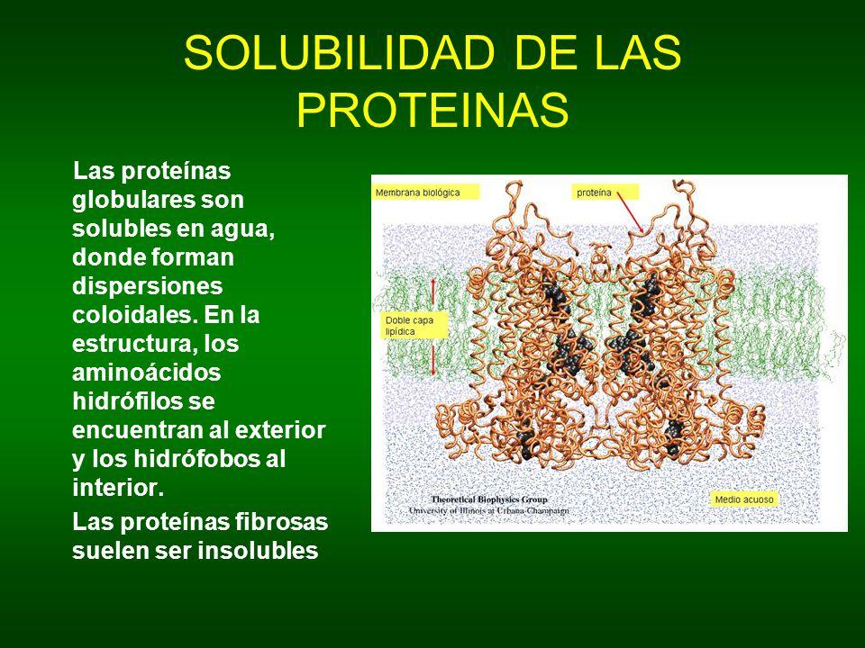 SOLUBILIDAD DE LAS PROTEINAS