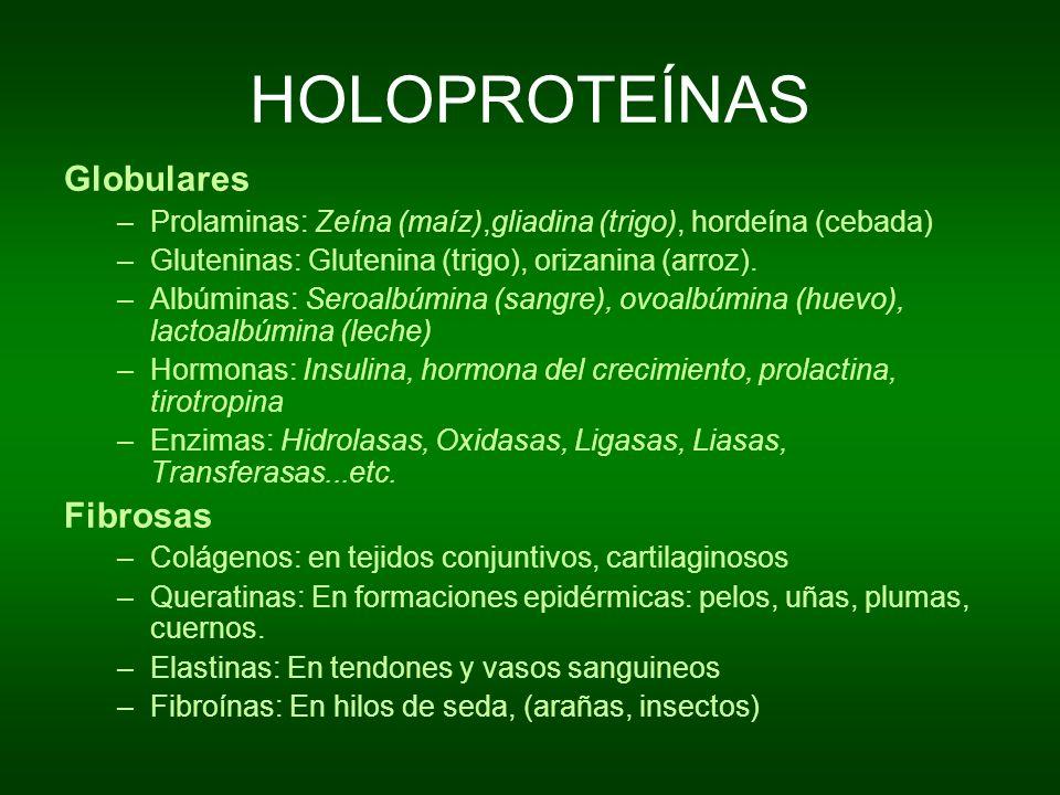 HOLOPROTEÍNAS Globulares Fibrosas