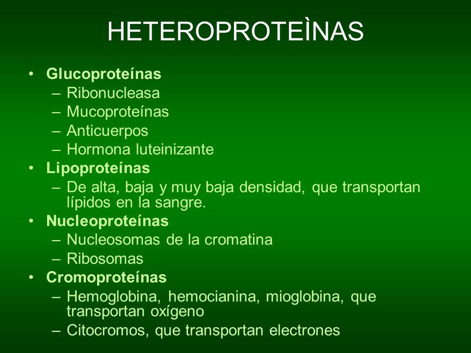 HETEROPROTEÌNAS Glucoproteínas Ribonucleasa Mucoproteínas Anticuerpos
