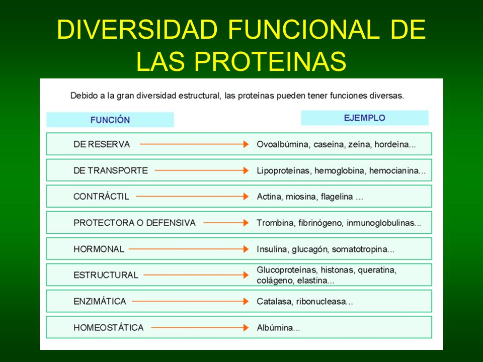 DIVERSIDAD FUNCIONAL DE LAS PROTEINAS