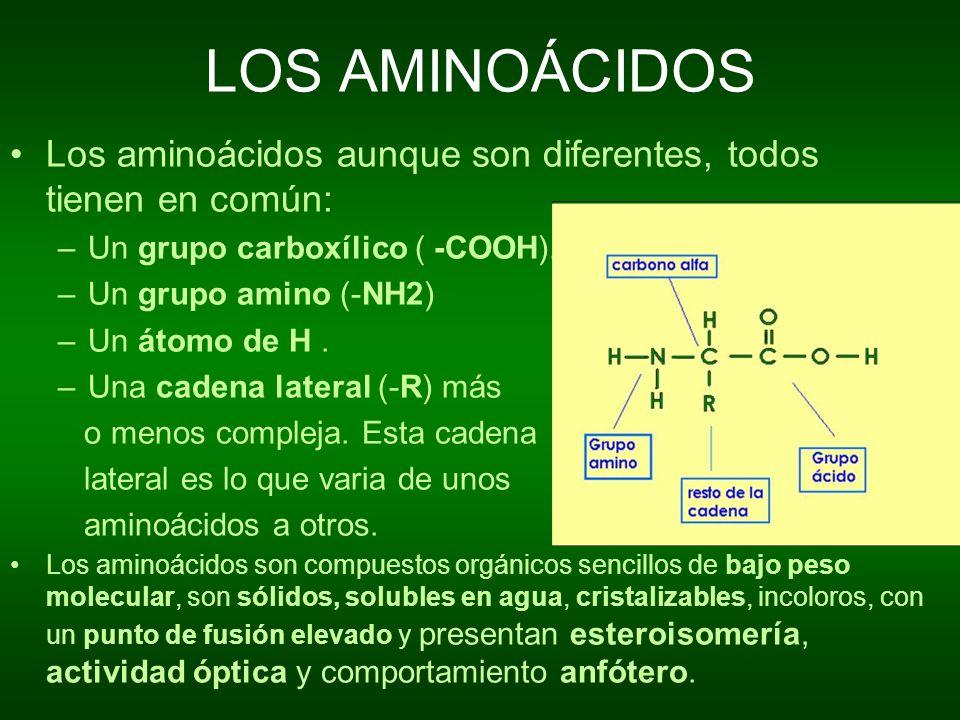 LOS AMINOÁCIDOSLos aminoácidos aunque son diferentes, todos tienen en común: Un grupo carboxílico ( -COOH).