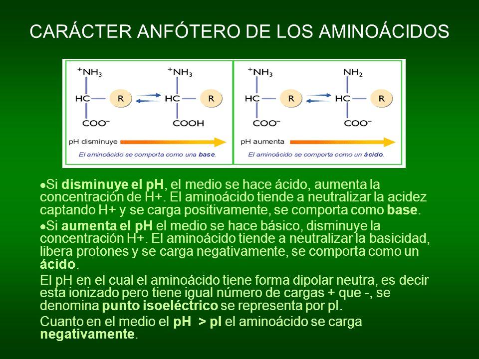 CARÁCTER ANFÓTERO DE LOS AMINOÁCIDOS