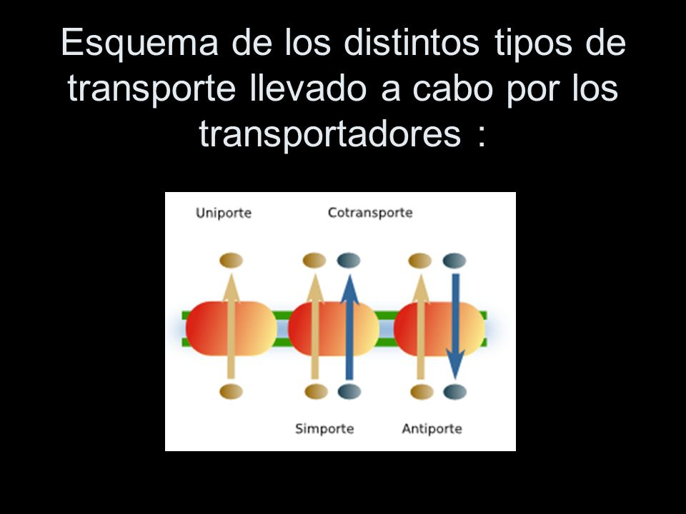 Esquema de los distintos tipos de transporte llevado a cabo por los transportadores :