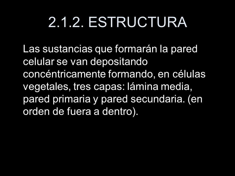 2.1.2. ESTRUCTURA
