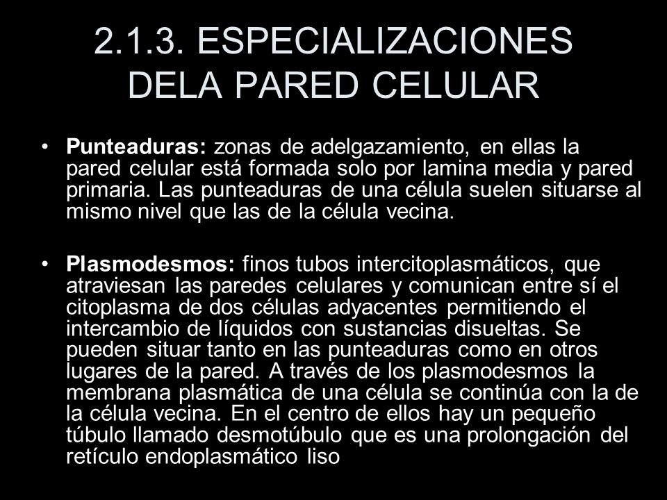 2.1.3. ESPECIALIZACIONES DELA PARED CELULAR