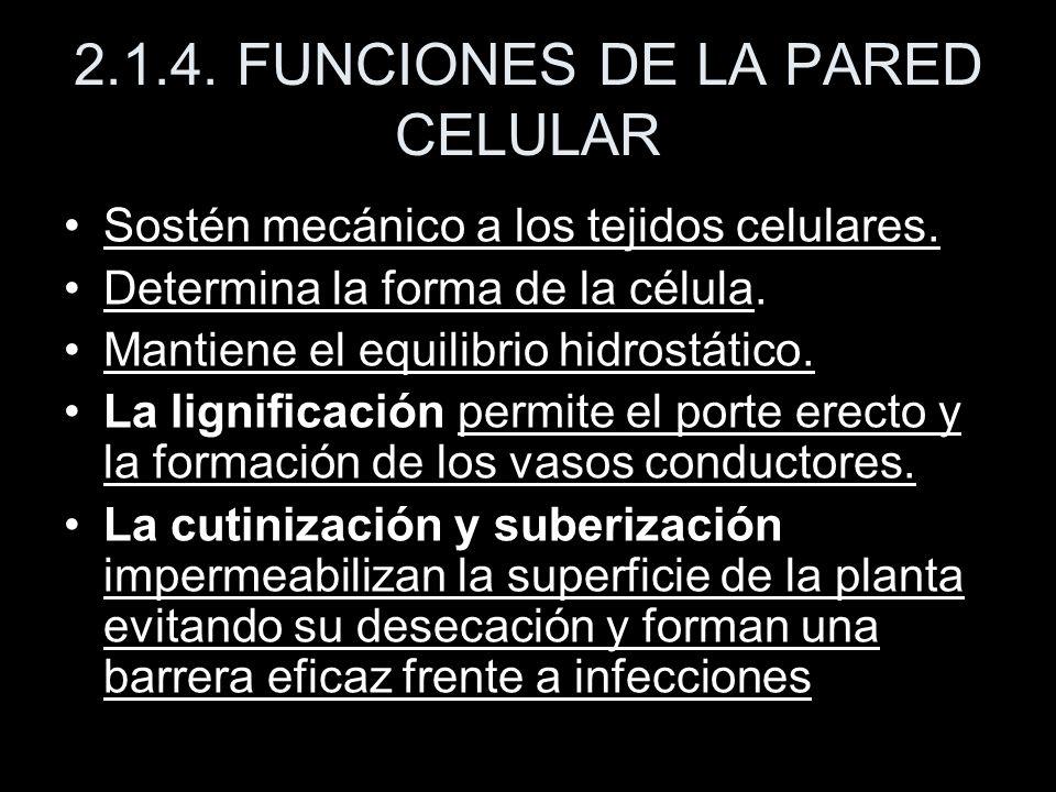 2.1.4. FUNCIONES DE LA PARED CELULAR