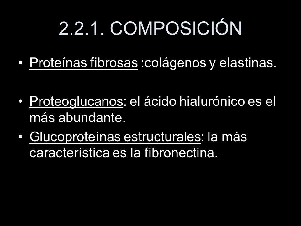 2.2.1. COMPOSICIÓN Proteínas fibrosas :colágenos y elastinas.