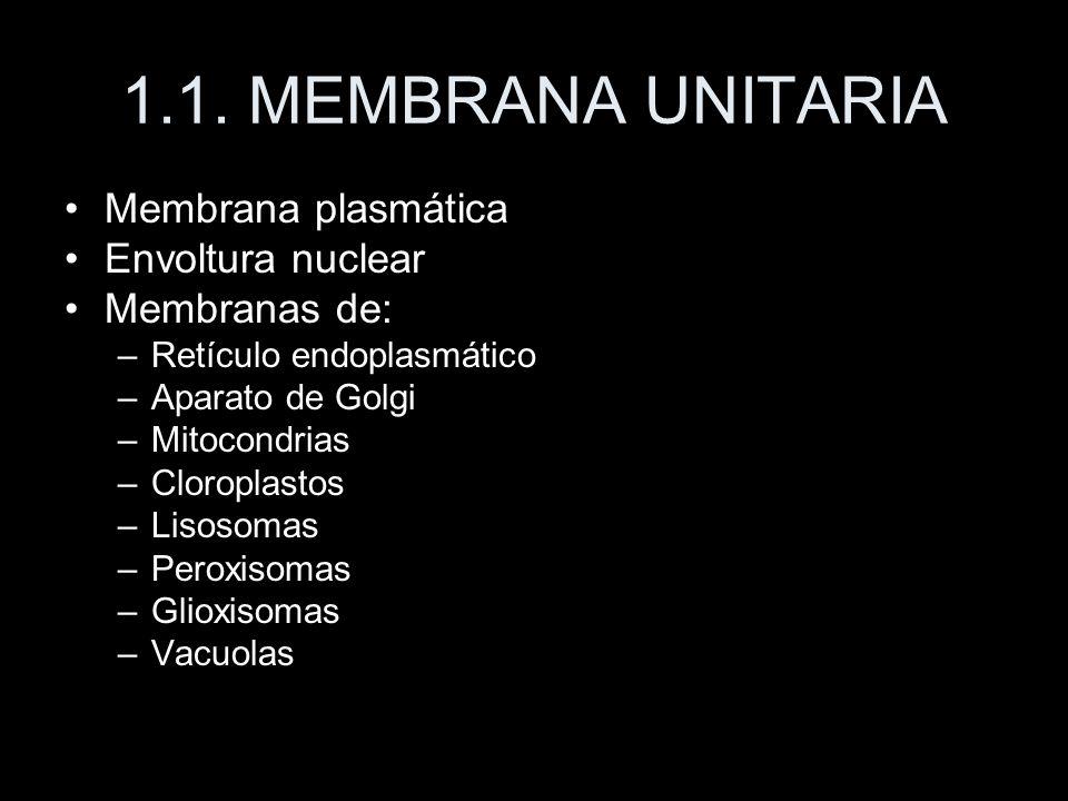 1.1. MEMBRANA UNITARIA Membrana plasmática Envoltura nuclear