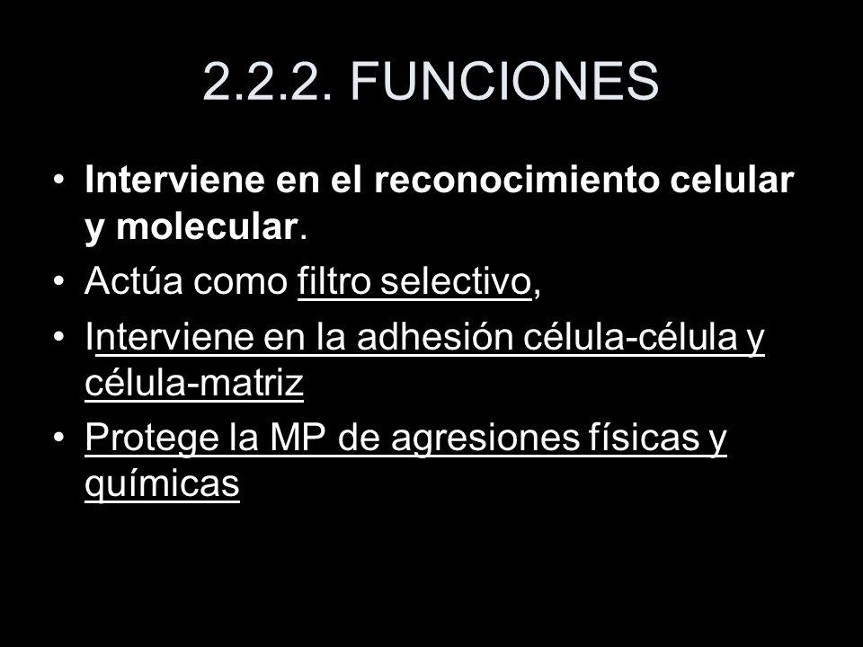2.2.2. FUNCIONES Interviene en el reconocimiento celular y molecular.