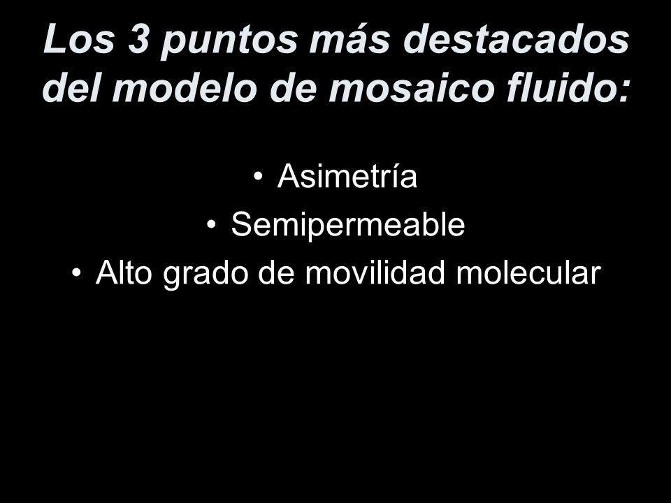 Los 3 puntos más destacados del modelo de mosaico fluido: