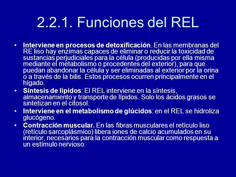 2.2.1. Funciones del REL