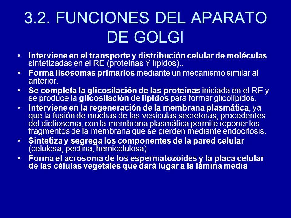 3.2. FUNCIONES DEL APARATO DE GOLGI