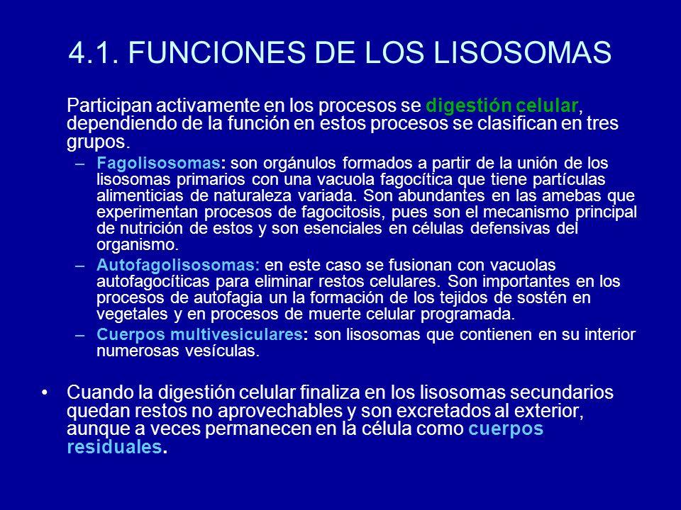 4.1. FUNCIONES DE LOS LISOSOMAS