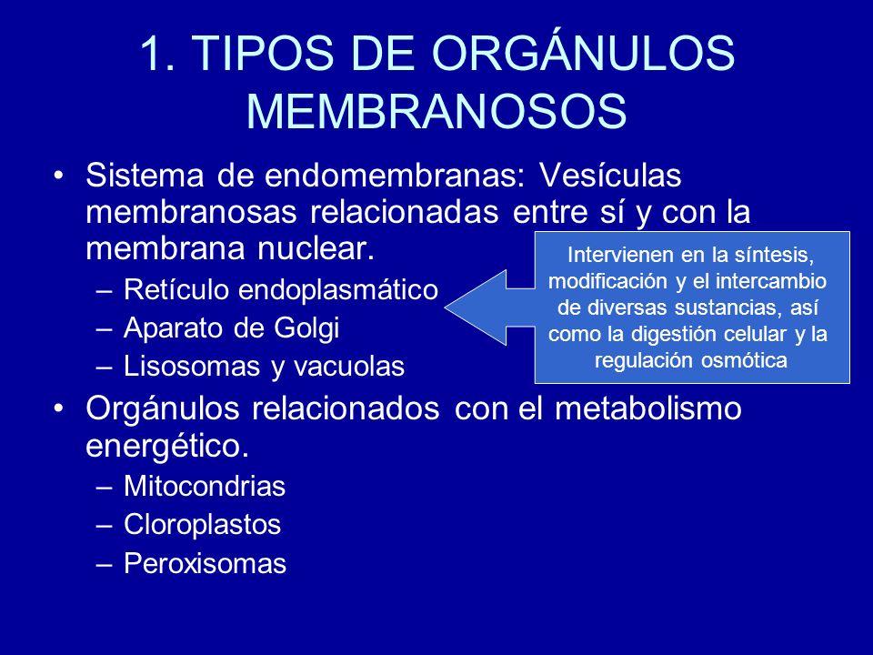 1. TIPOS DE ORGÁNULOS MEMBRANOSOS