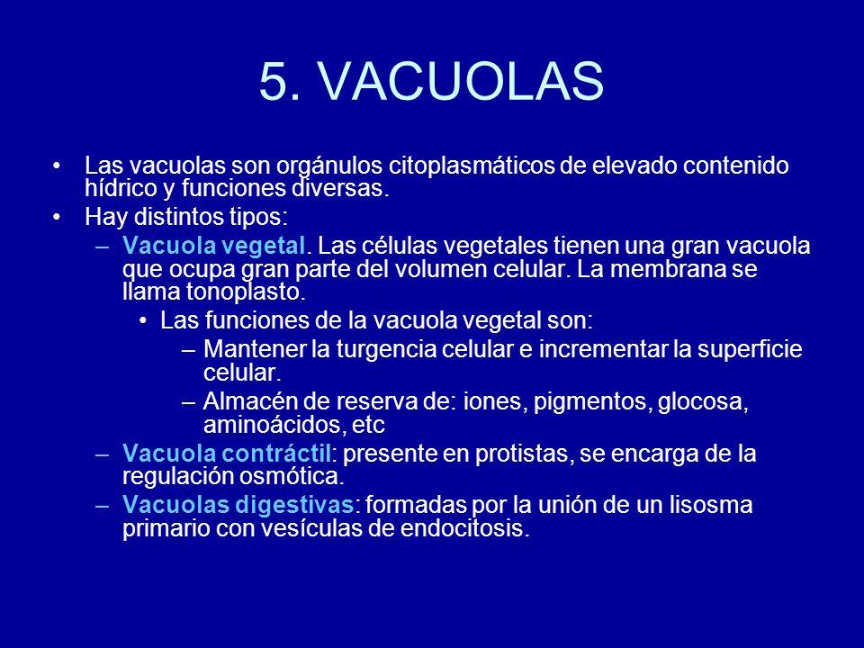 5. VACUOLAS Las vacuolas son orgánulos citoplasmáticos de elevado contenido hídrico y funciones diversas.