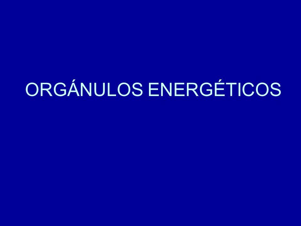 ORGÁNULOS ENERGÉTICOS