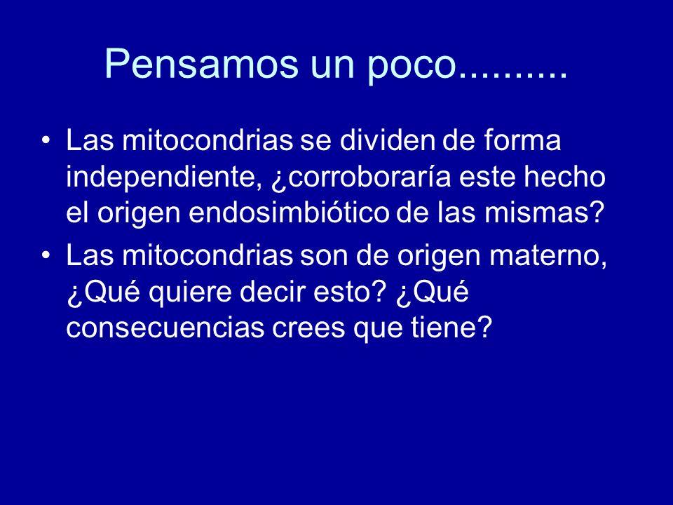 Pensamos un poco.......... Las mitocondrias se dividen de forma independiente, ¿corroboraría este hecho el origen endosimbiótico de las mismas