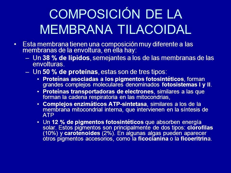 COMPOSICIÓN DE LA MEMBRANA TILACOIDAL