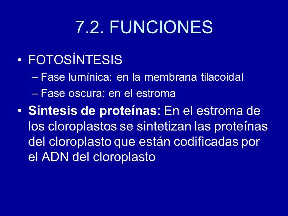 7.2. FUNCIONES FOTOSÍNTESIS