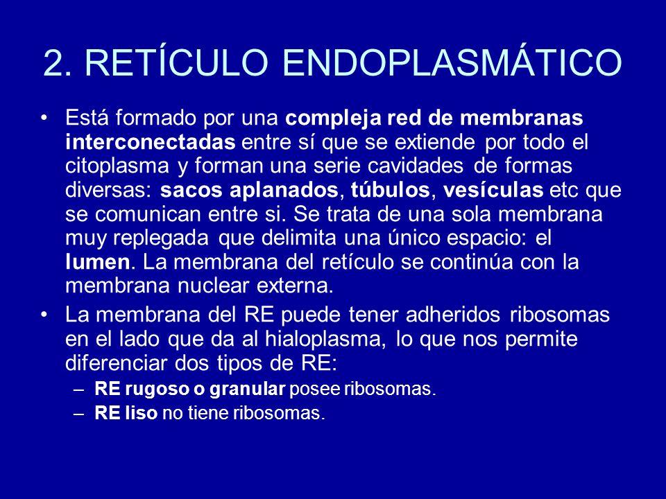 2. RETÍCULO ENDOPLASMÁTICO