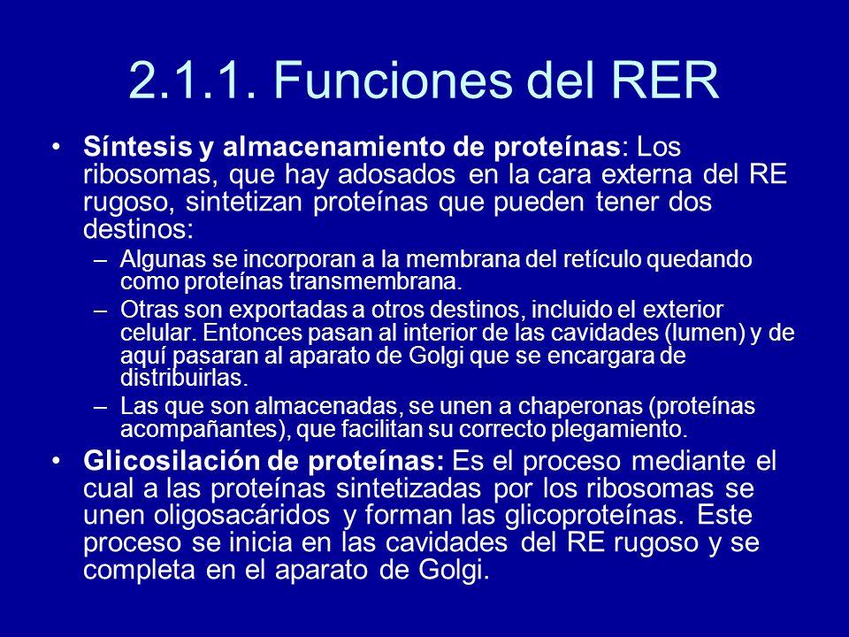 2.1.1. Funciones del RER
