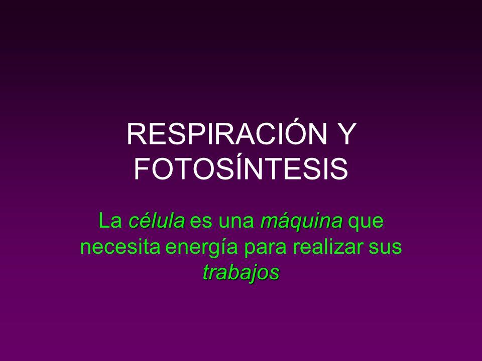 RESPIRACIÓN Y FOTOSÍNTESIS