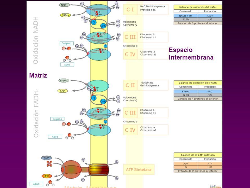 Espacio intermembrana