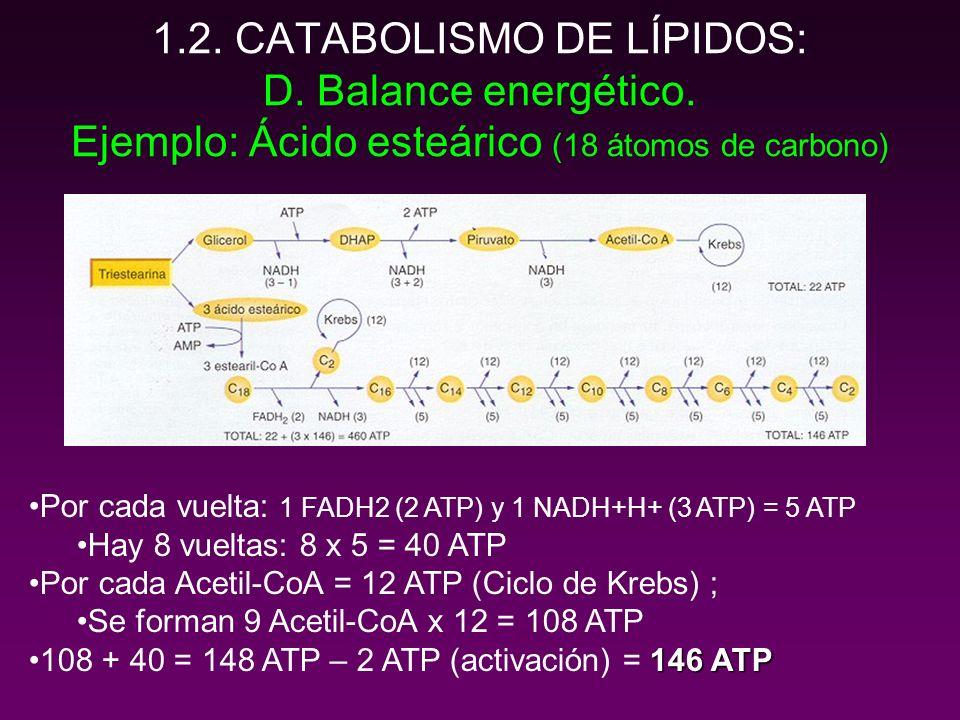 1. 2. CATABOLISMO DE LÍPIDOS: D. Balance energético