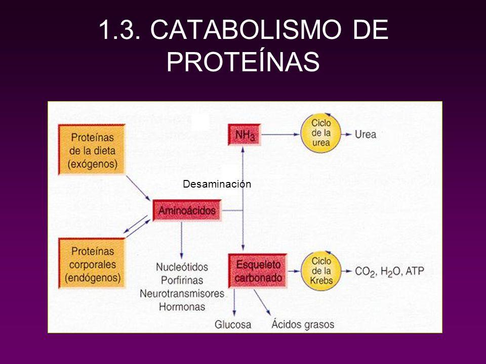1.3. CATABOLISMO DE PROTEÍNAS